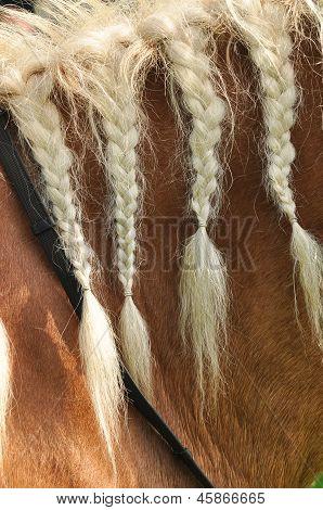 Braided horse mane
