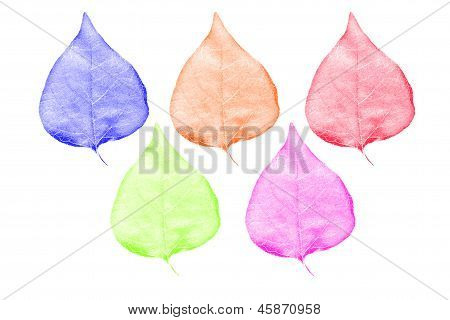 Colorful Of Leaves Of Pipal