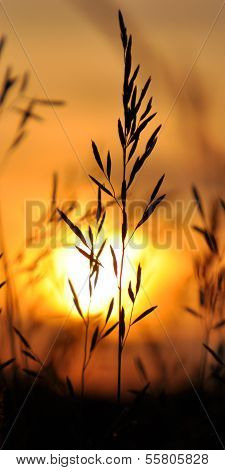 Landscape, sunny sunset in a field