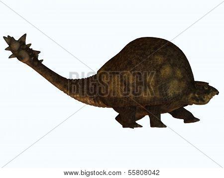 Glyptodont On White