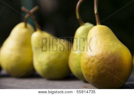 Sweet, ripe, organic pears