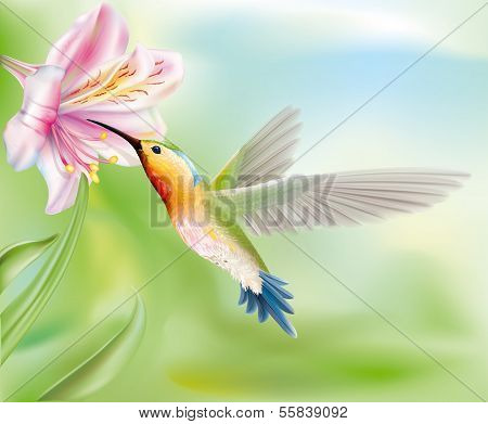Hummingbird In The Flower