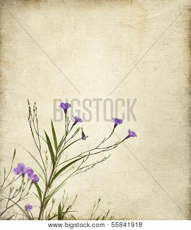 Purple Ruella Flowers Photo Illustration