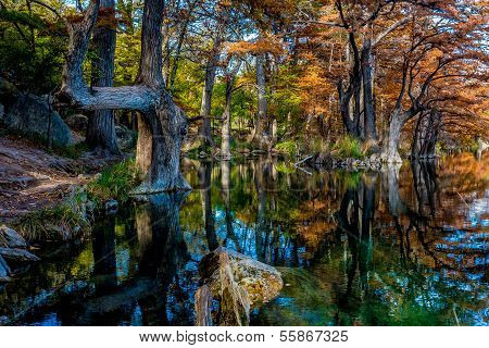 Beautiful Bright Fall Foliage on Large Cypress Trees Surrounding the Clear Frio River in Texas
