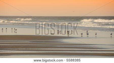Birds On The Beach Outerbanks North Carolina