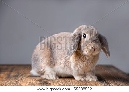 A Kind Grey Easter Bunny Is Listening
