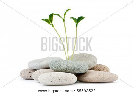 Pebbles and seedlings - alternative medicine concept poster