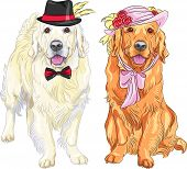 hipster pair of dogs: white labrador gentleman in a hat and bow tie and red labrador lady in a hat with flowers and ribbons and bow at the neck poster