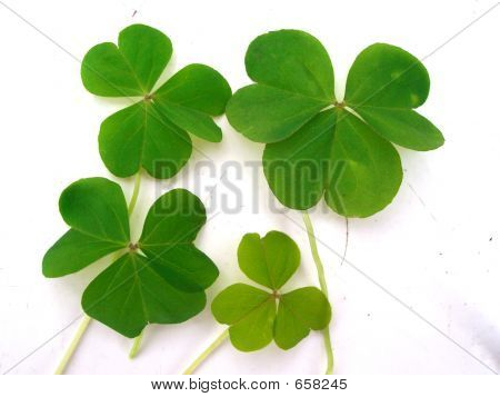 Clover Leaves Good Luck