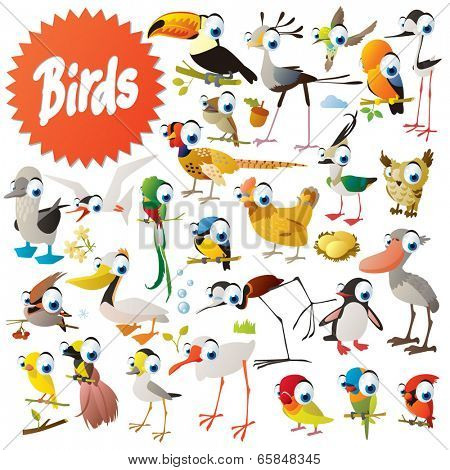 Big vector birds set