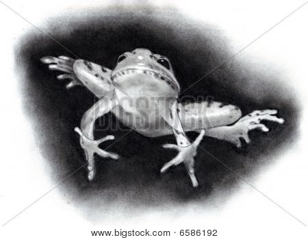 Drawing of a Leaping Frog