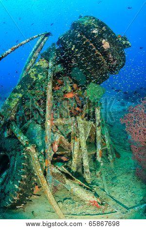 Glassfish swim around metal wreckage