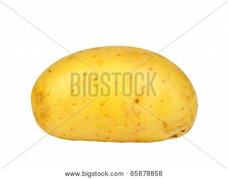 Single Yellow Raw Potato