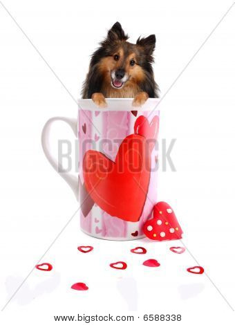 Sheltie inside a Coffee mug decorated with hearts for valentines day or for a sweetheart showing love poster
