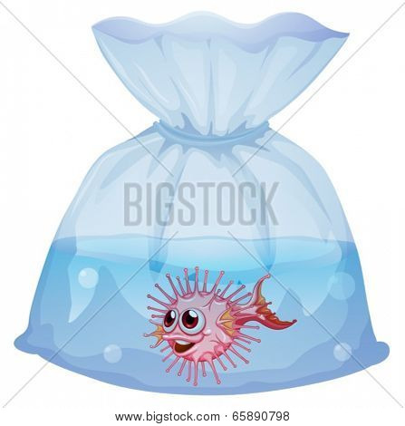 Illustration of a puffer fish inside the pouch on a white background