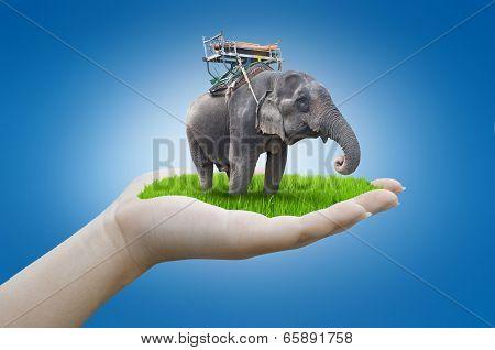 Hand Holding Elephant
