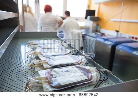 Blood bags in a hematological laboratory.