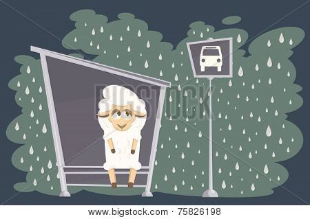 Baby lamb waiting for the bus on a rainy street. poster