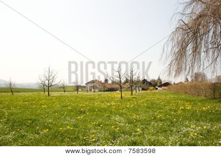 Rural Home And Property