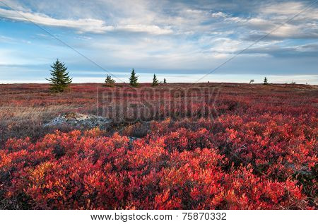 Dolly Sods Wilderness Area West Virginia
