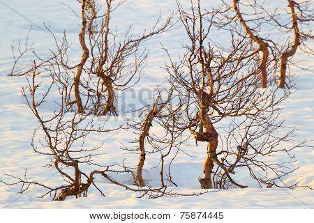 Tundra in the winter.