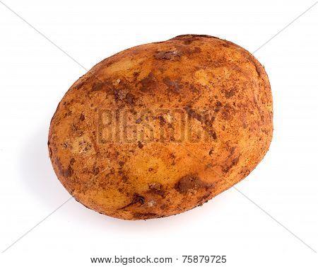 Closeup Of Dirty Australian Organic Russet Potato