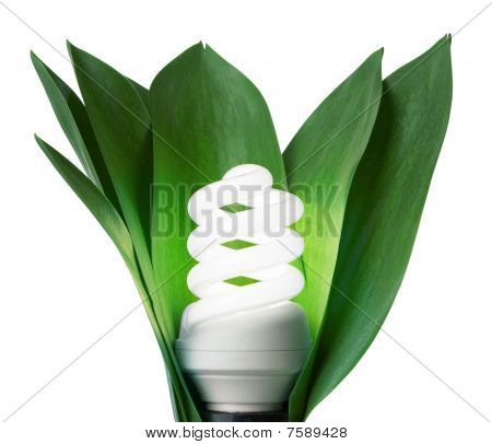Fluorescence Lamp In Green Leaves Of Isolated On A White Background