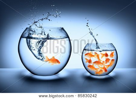 goldfish jumping from one bowl to another, improvement concept poster