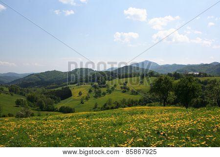 Hügellandschaft mit Löwenzahn
