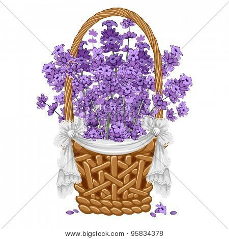 Gentle fragrant lavender in thatch wicker basket.  Vector illustration. Isolated on white background.