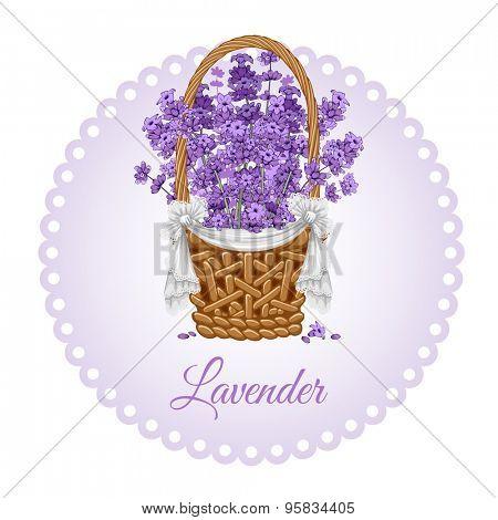 Vintage card with fragrant lavender in thatch wicker basket.  Vector illustration.