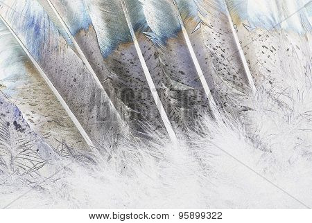 Native American Indian Feathers Art