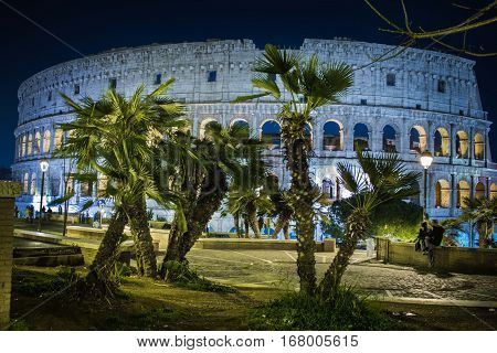 Colosseum at night. palm, tree, garden, nature, sky, colosseum