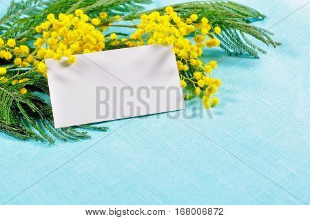 8 March background - white card in the mimosa flowers for 8 March text. 8 March is international women day