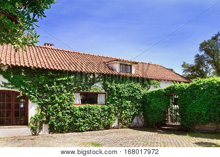 Country house with bindweed on the walls