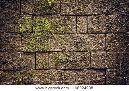 Ancient textured stone wall with moss and roots as ancient background