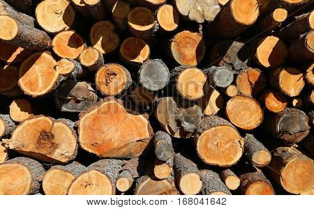 Pile Of Wood With Large Logs Cut By Loggers In The Mountains