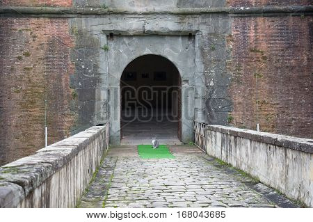Italy Pistoia - November 27 2016: the view of a cat at the main gate of the Medici Fortress of Santa Barbara on November 27 2016 in Pistoia Italy.