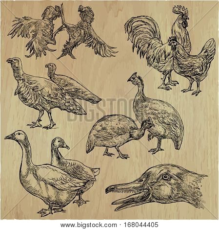 Farm animals around the World. Birds. An hand drawn vector illustrations. Collection. Editable in layers and groups.