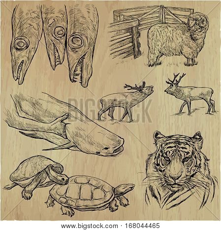 Animals around the World. An hand drawn vector illustrations. Collection. Editable in layers and groups.