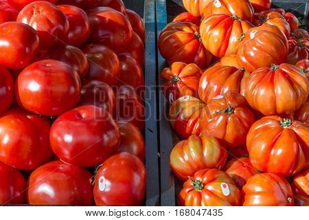 Picture of normal and beefsteak tomatoes on a Canadian market