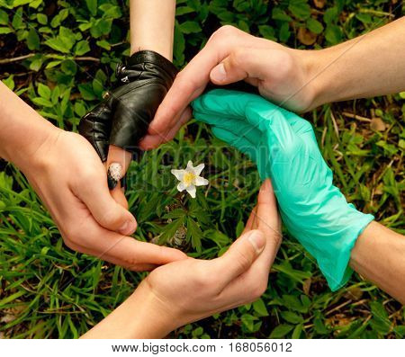 Hands of different people, protecting green plants and flowers