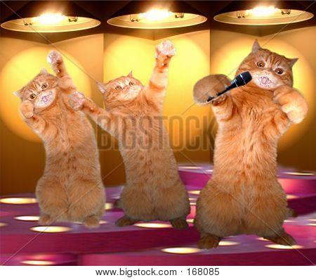 The Rap Cats