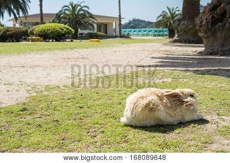 Crouched rabbit on thin grass growing ground in sideways