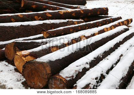 Many Cut Wooden Logs In The Winter Under The Snow