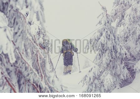 Hikers in the winter mountains