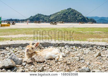 A rabbit lying down on a gravel in sideways