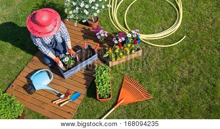 Woman sitting on the lawn, wearing gloves, straw hat potting planting  flowers. Gardening concept.