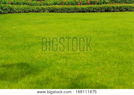 Green lawns, grass and green trees beside the house for the background.