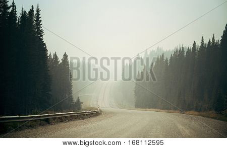 Foggy road in forest in Banff National Park